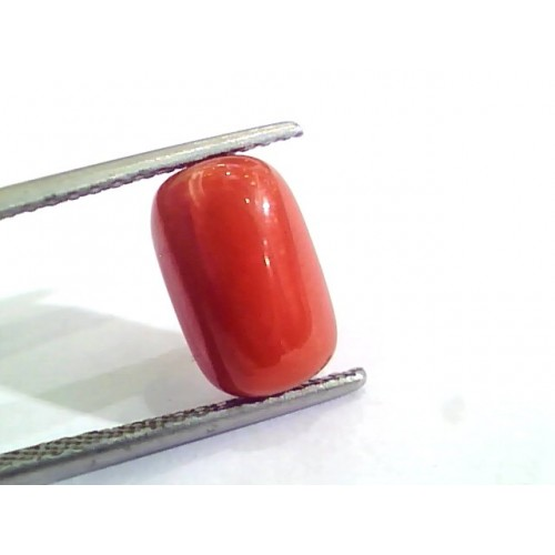 4.58 Ct Untreated Natural Italian Red Coral Moonga Gemstone AA