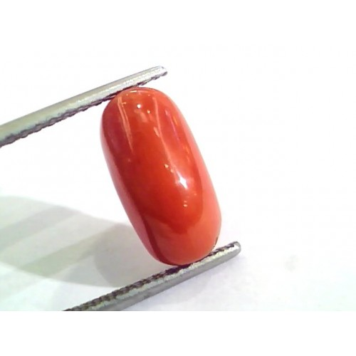 4.83 Ct Untreated Natural Italian Red Coral Moonga Gemstone AA