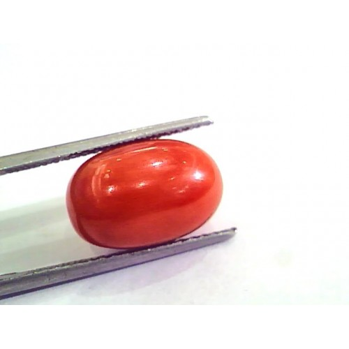 9.52 Ct 15.5 Ratti Natural Italian Red Coral Moonga Gemstone AAAA